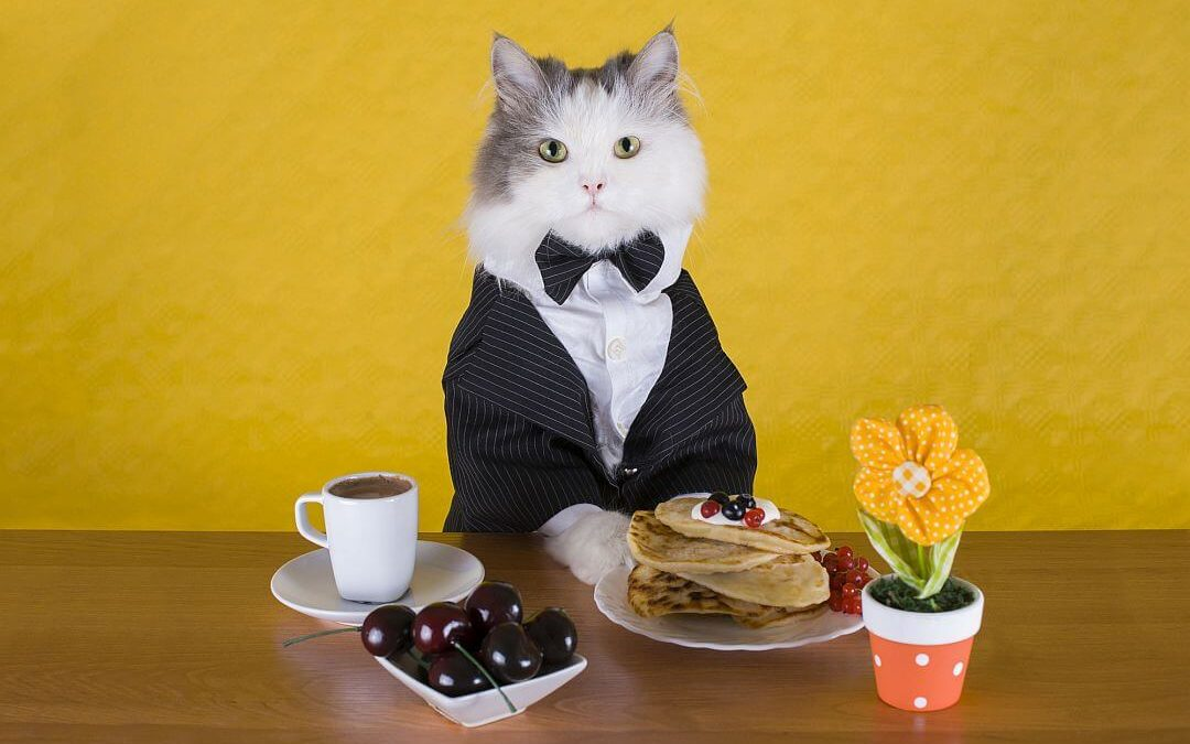 Cat Cafés: Purrrfect Relaxation Or Cruelty To Cats?