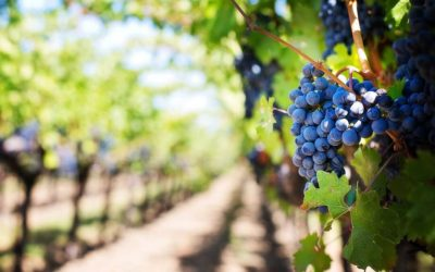 Delectable Portuguese Red Wines To Try In Portugal